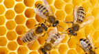 Researchers Analyze Bee Behavior with Mathematica