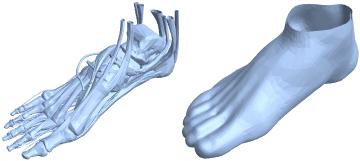 Visualize E Analise Estruturas Anatômicas Novos Recursos Do